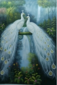森林孔雀双白