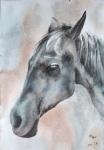 村子里最靓的马